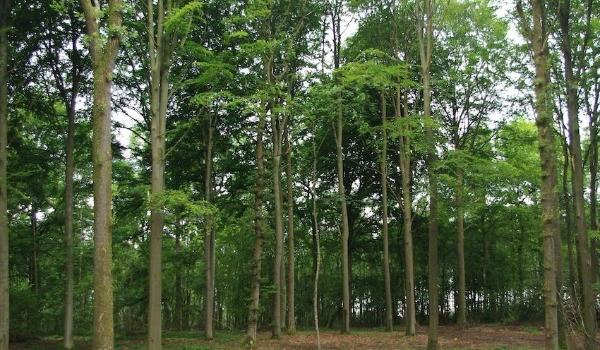 Aménagement forestier d'un bois feuillu en zone Natura 2000
